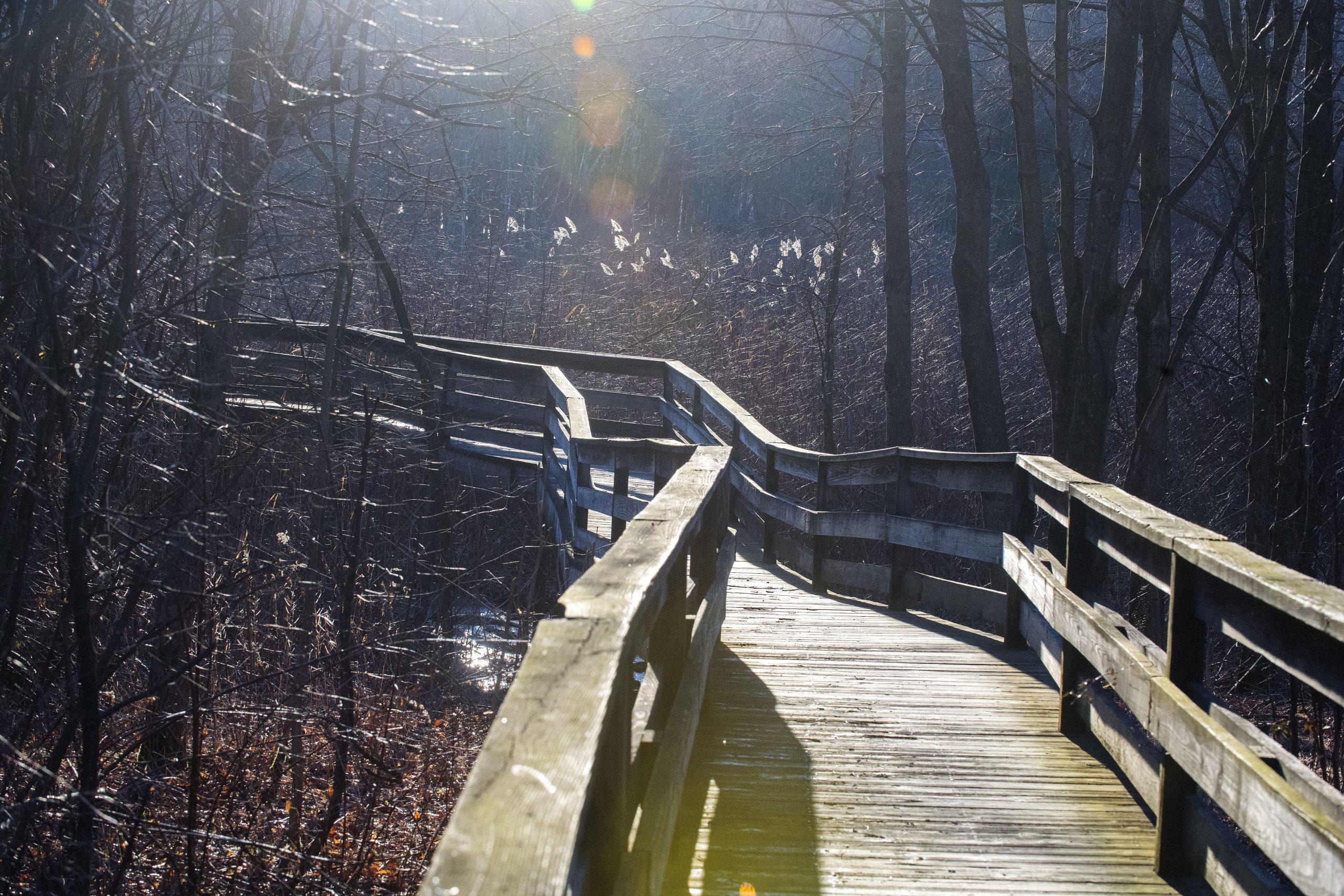 The boardwalk at the Carbon County Environmental Education Center is lit by the morning sunlight Wednesday morning.